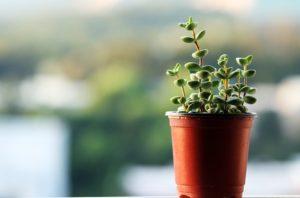 観葉植物で集中力アップ