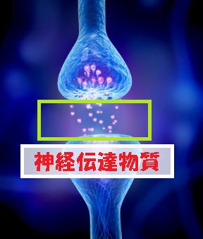 神経伝達物質